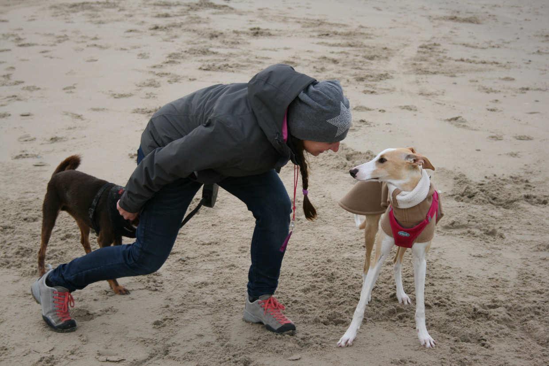 Hundeausbildung am Strand